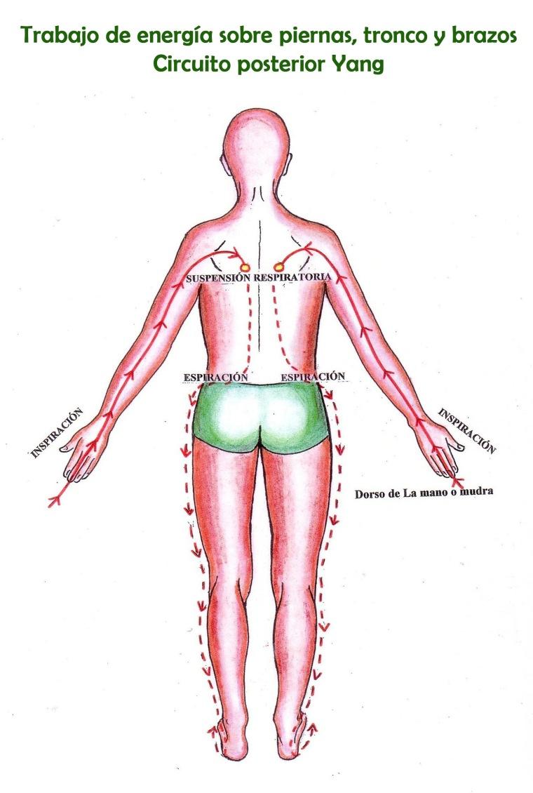 Circuito piernas tronco y brazos yang