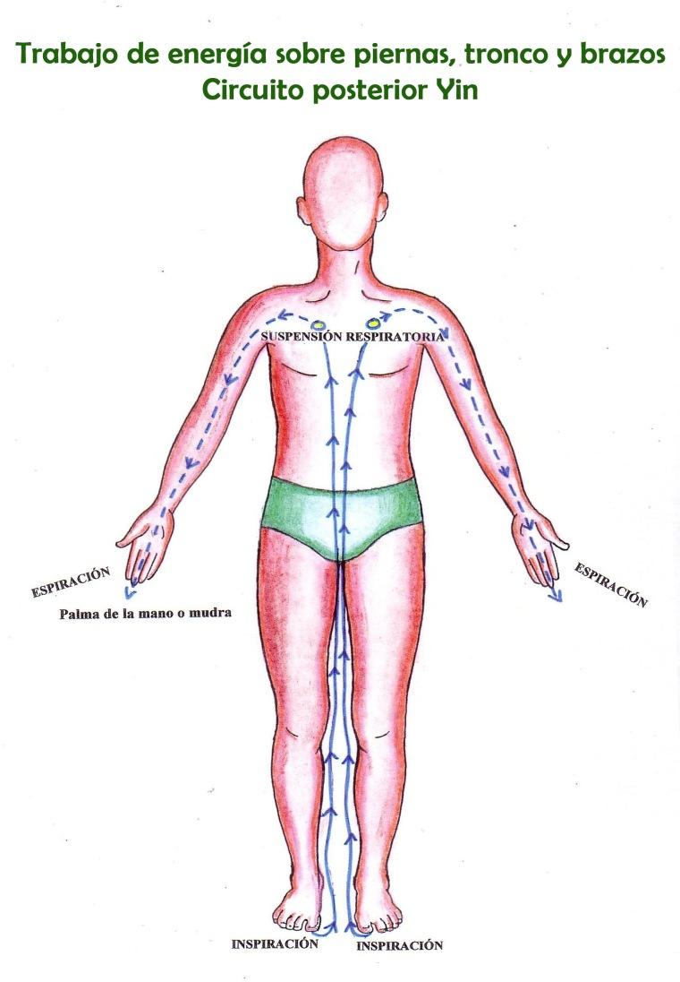 Circuito piernas tronco y brazos yin