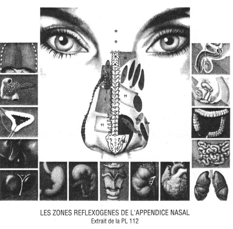 Zonas reflejas nariz