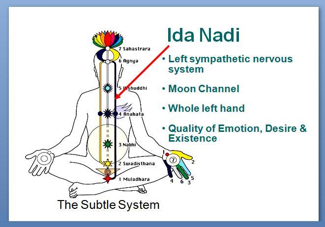 Left-Channel-or-Moon-Channel-known-as-Ida-Nadi-in-Sanskrit